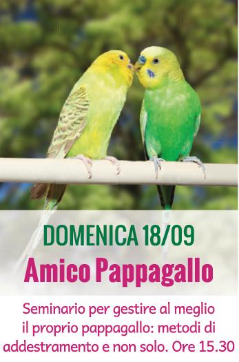 AMICO PAPPAGALLO