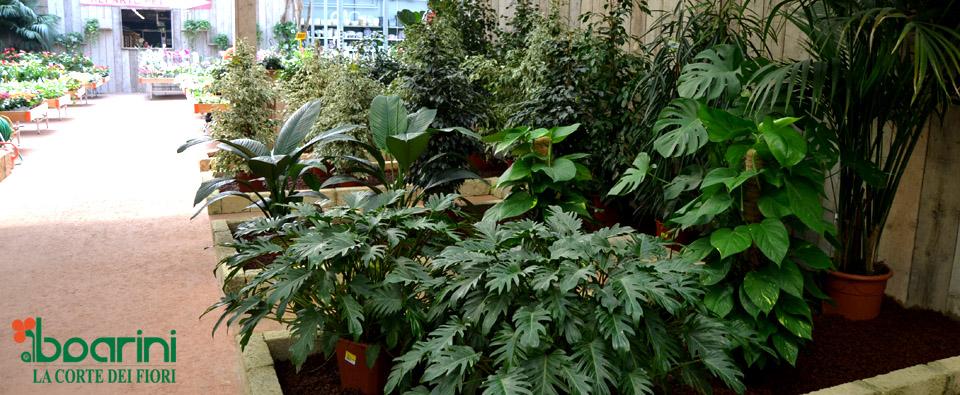 Verde: piante e fiori - Corte dei Fiori